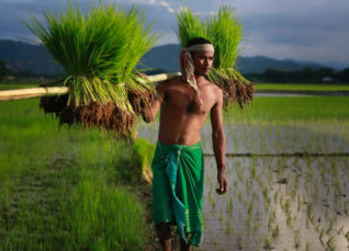 Paddy sowing Monsoon 2019- NYDailyNews 1200