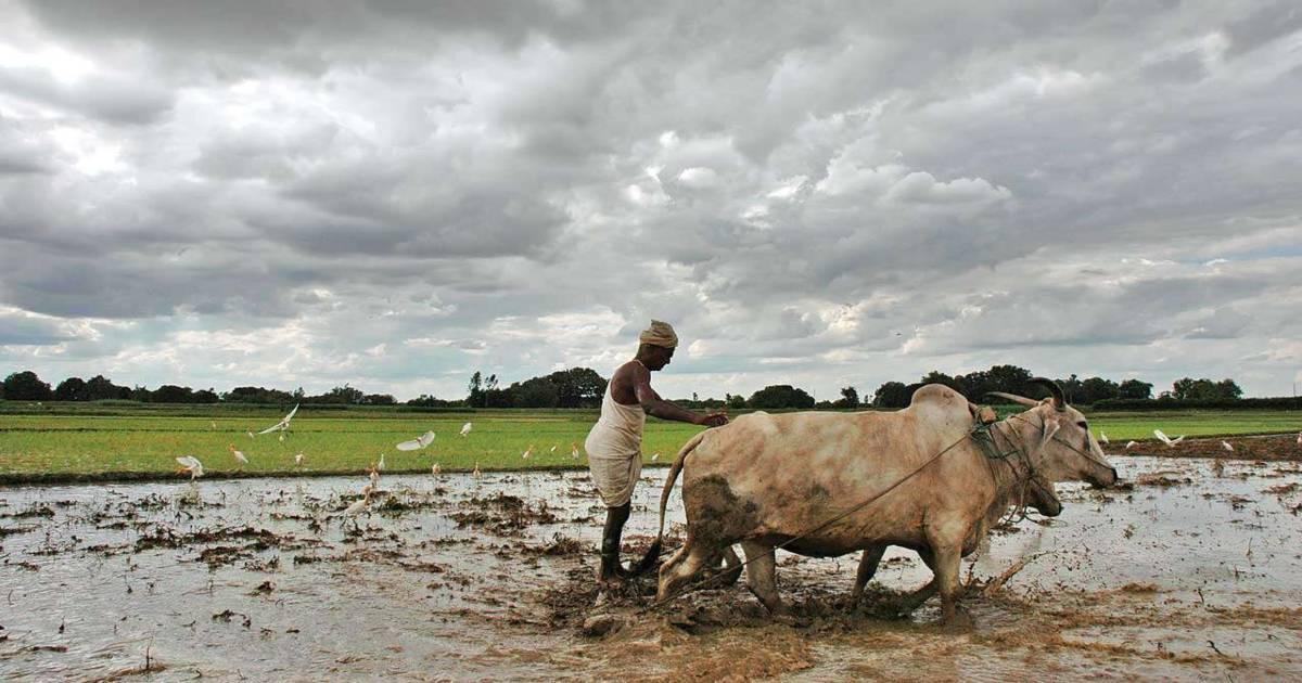 Punjab weekly weather forecast (1)