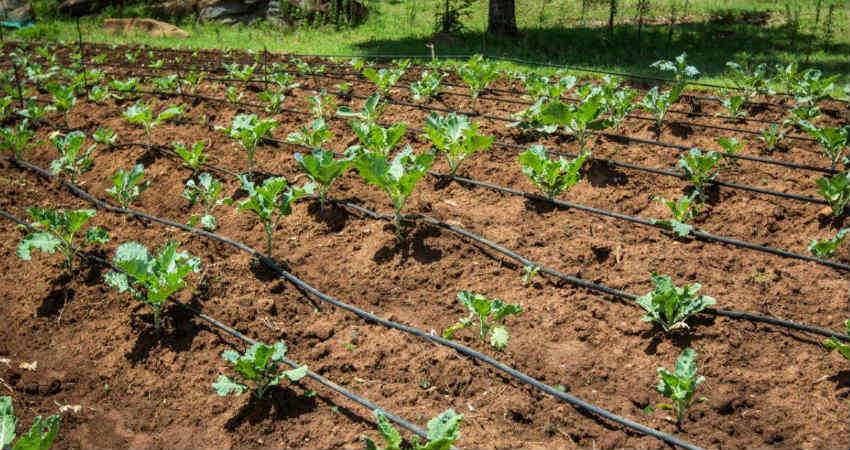 Sustainable Development Farm water usage