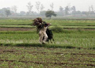 Haryana weekely weather forecast