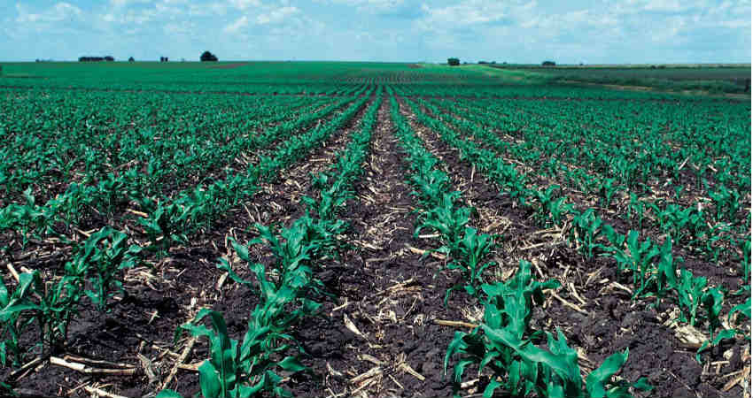 Crop Seeding