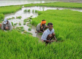 Uttar Pradesh weekly forecast