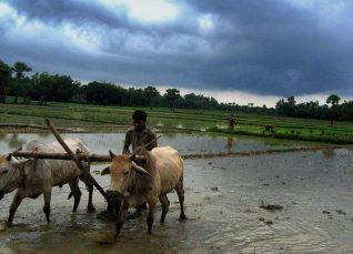 madhya pradesh weekly weather