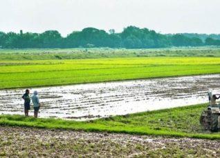 Haryana Weekly weather forecast