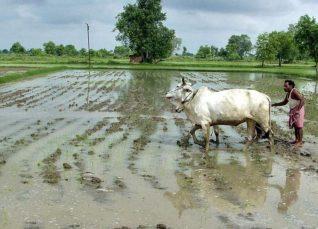 Rajasthan weekly weather forecast