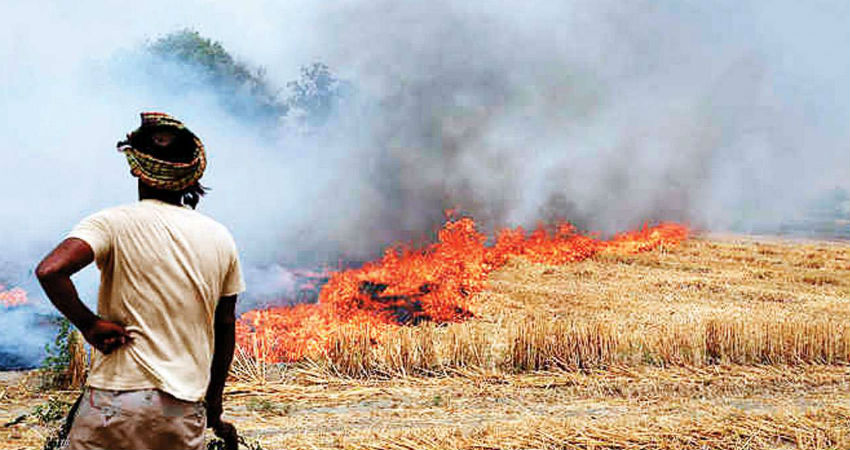 Stubble burning in Punjab: CM of Punjab appeals compensation of Rs 100 per quintal paddy to stop farmers from stubble burning   Skymet Weather Services