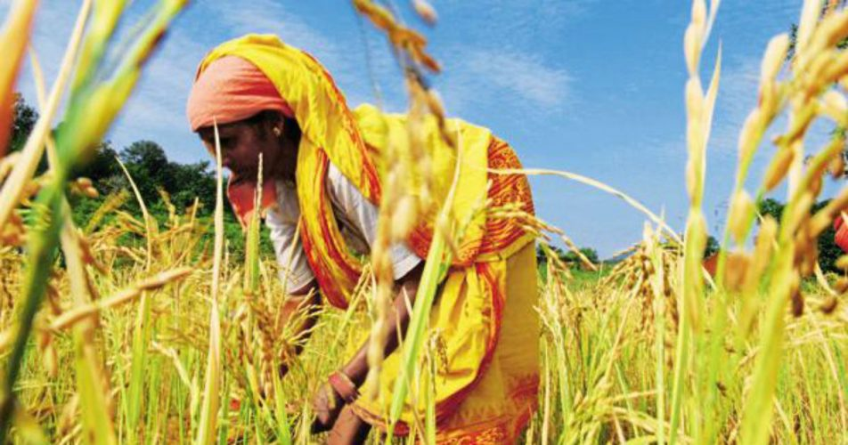 Paddy production in India_Live Mint 1200