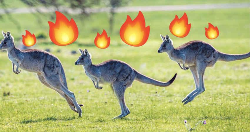 South Australia Heat Wave