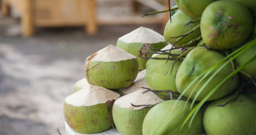 Coconut Production in India