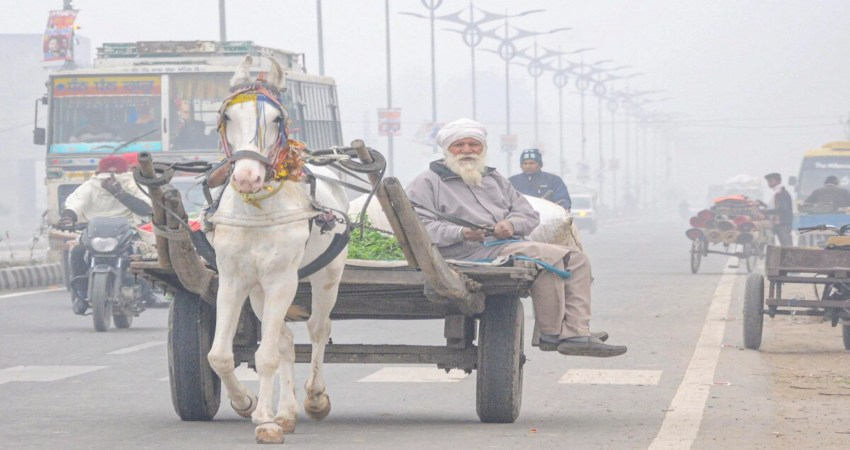 Punjab winter