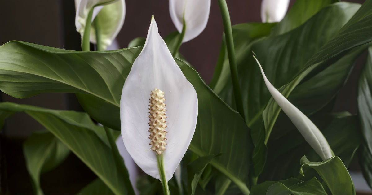 Houseplants that will make your home cozier and clean the air