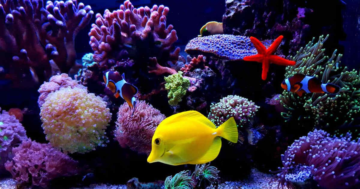 keep an aquarium clean