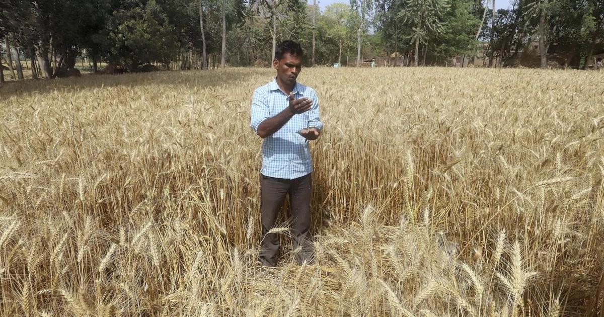 [Hindi] उत्तर प्रदेश का साप्ताहिक मौसम पूर्वानुमान (2 से 8 अप्रैल, 2020), किसानों के लिए फसल सलाह