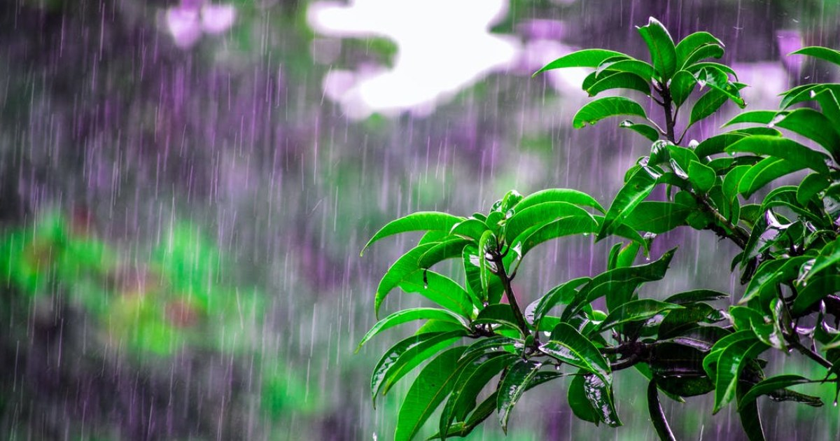 Pre Monsoon Weather Activities