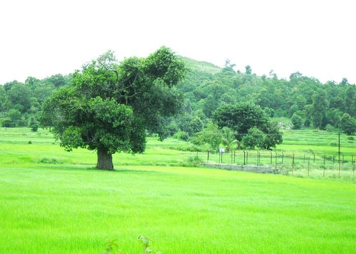 Yelagiri, Tamil Nadu