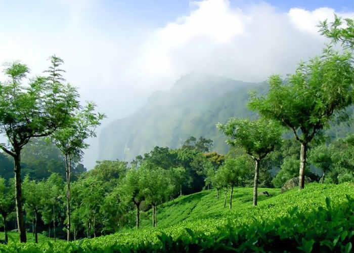 Coonoor, Tamil Nadu