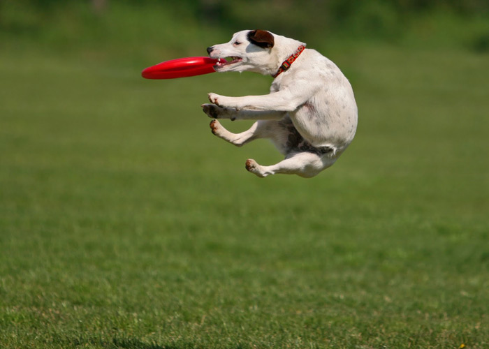 Play Frisbee