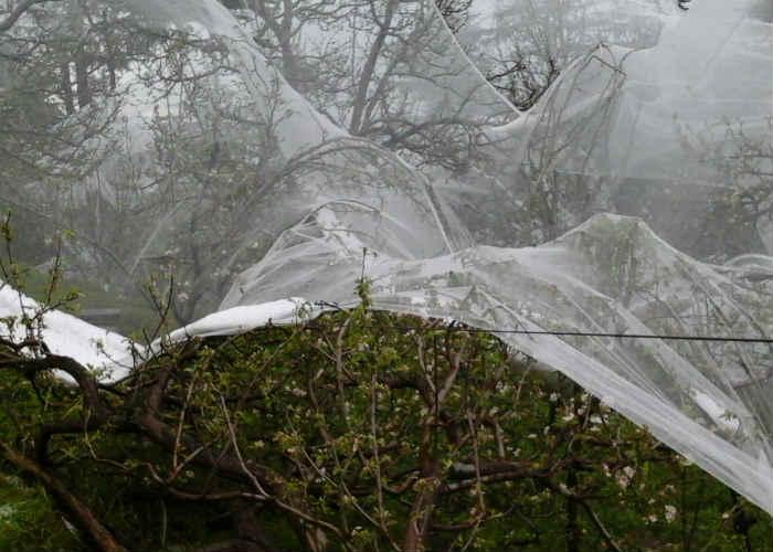 Hurla, Himachal Pradesh