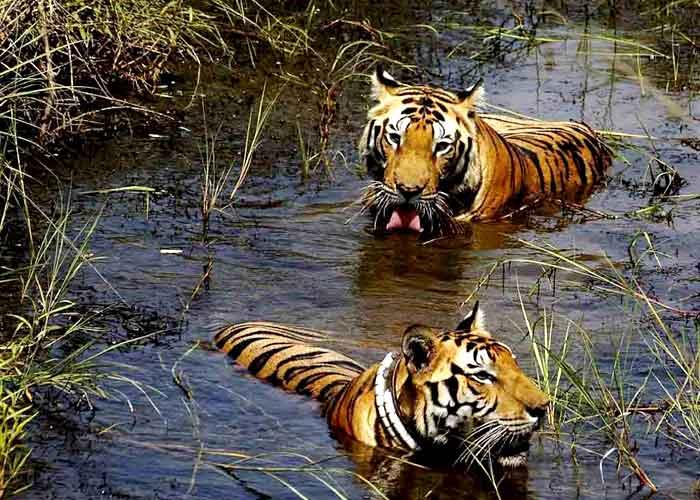 Corbett National Park, Uttaranchal