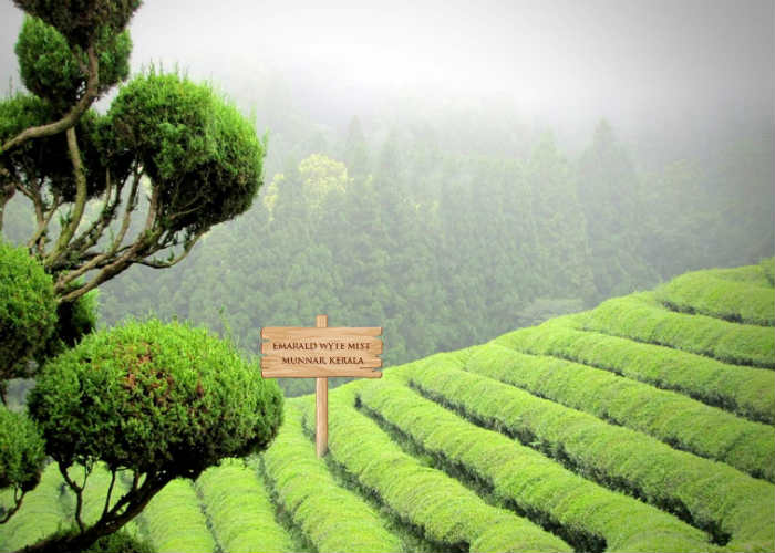 Enjoy Monsoon with tea