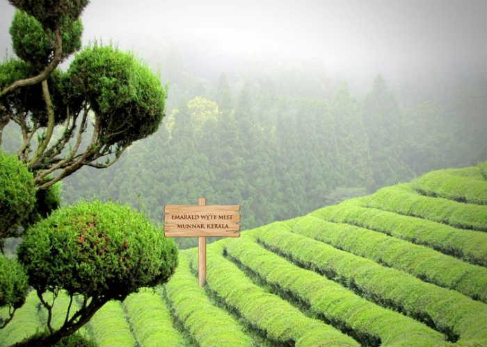 Enjoy Monsoon with tea